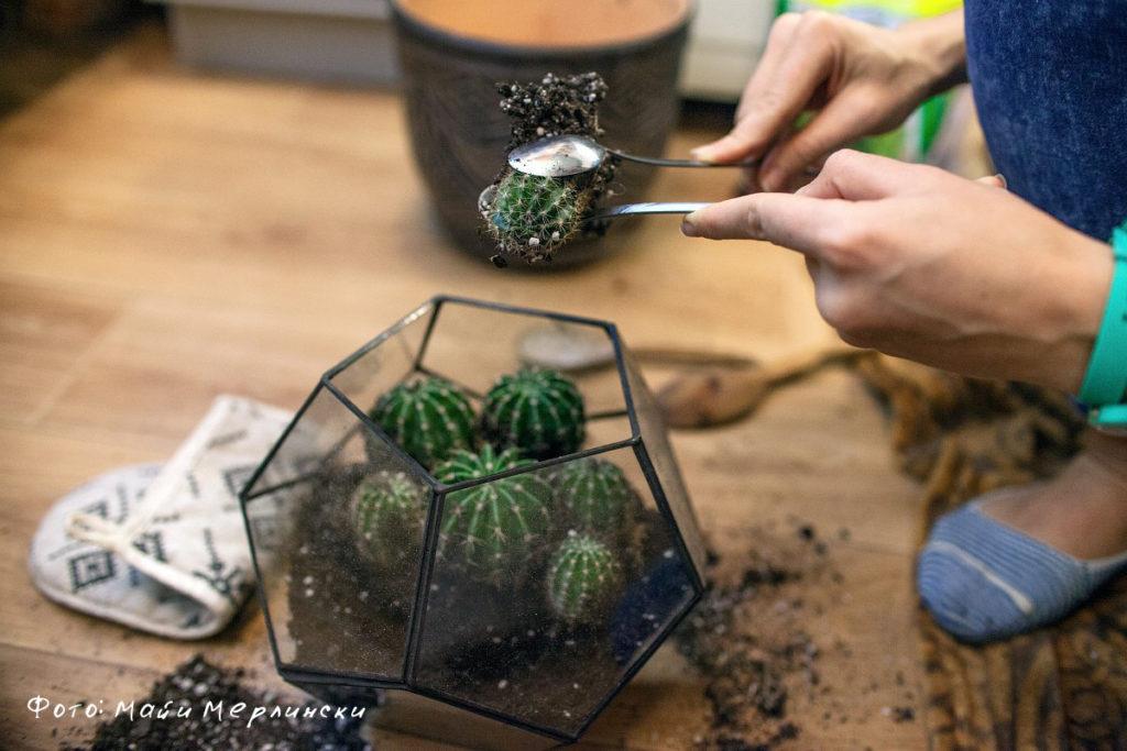 Как пересаживать кактусы в домашних условиях чтобы не 73