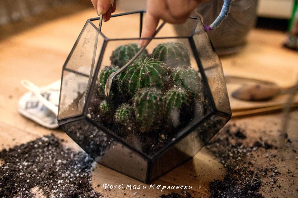 Как пересаживать кактусы в домашних условиях чтобы не 402