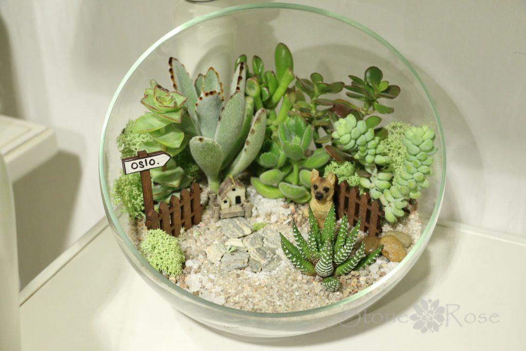 Волшебный мини-садик на подоконнике! Составляем композицию вместе