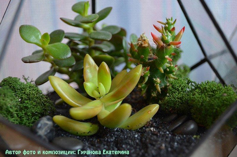 подходящие растения