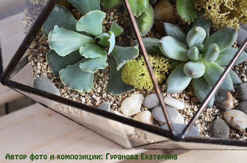 подборка растений