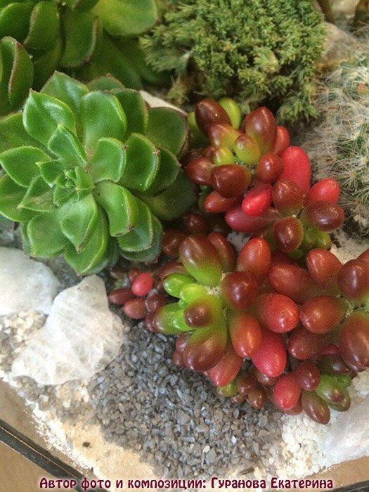 растения для композиции