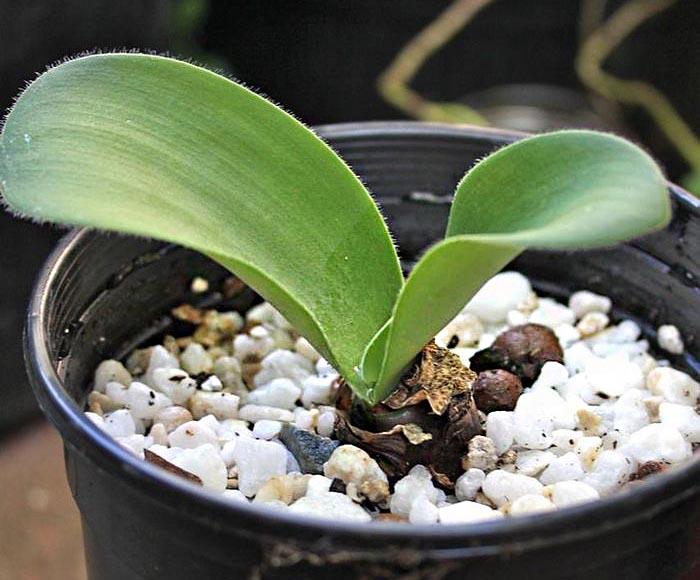 Растение в субстрате