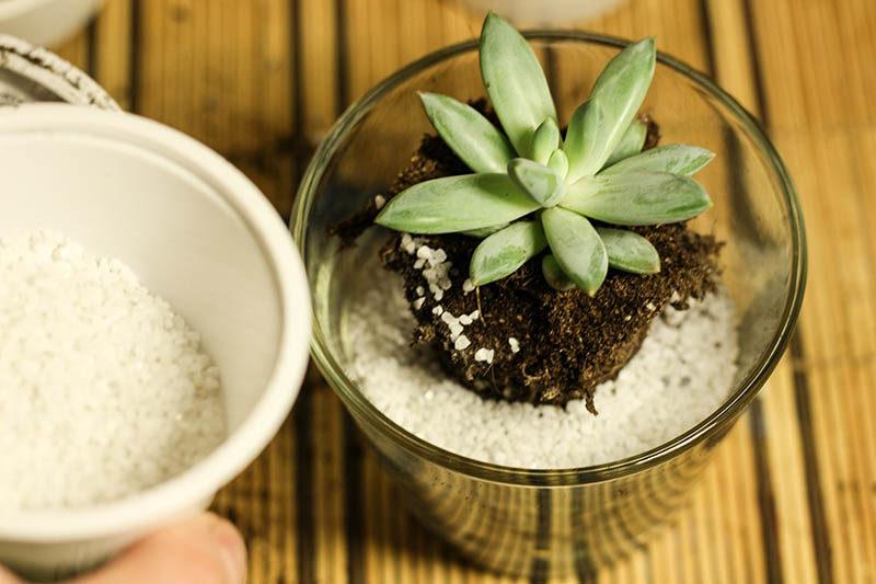Авторская фото-инструкция о том, как красиво посадить суккулент