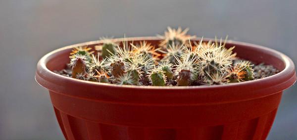 Фунгициды и удобрения подходящие кактусам и суккулентам