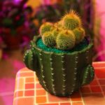 фотографии пересадки кактуса