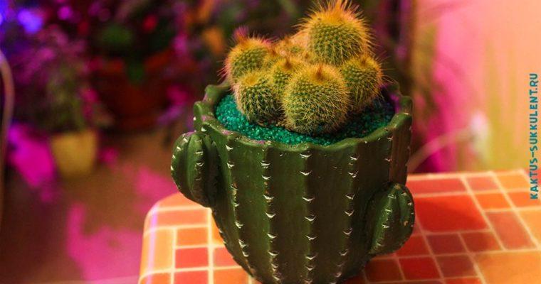 Пересаживаем новый кактус в горшок: авторская фото инструкция