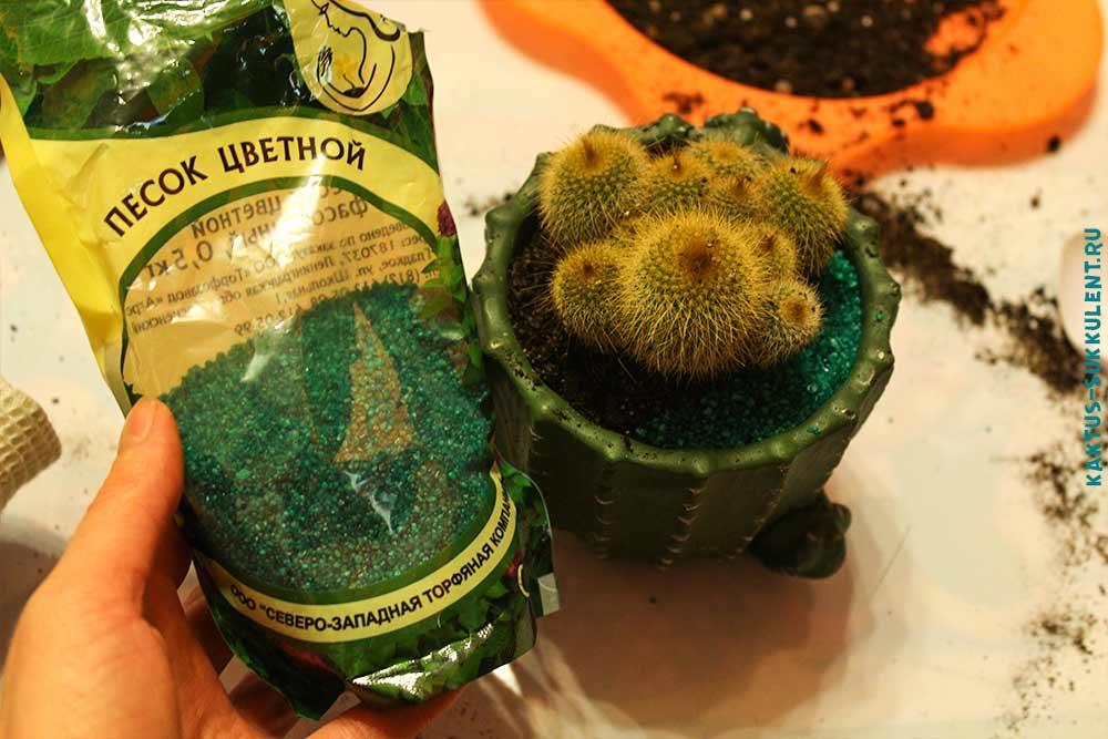 декор для кактуса