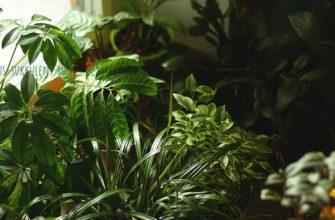 неприхотливые растения
