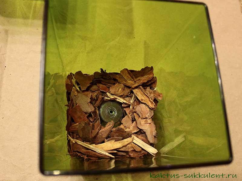 Пересаживаем орхидею правильно: пошаговая инструкция с фото